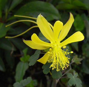 Alongissima9