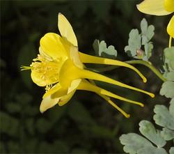 Alongissima10